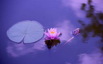 Calming nature